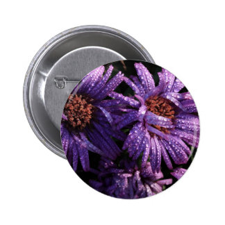 aster with morning dew pinback button