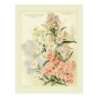 Asters (Michaelmas daisy) Postcard