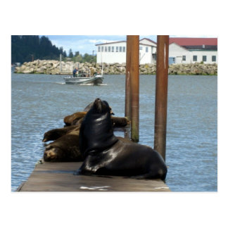 Astoria Oregon Sealions Postcard