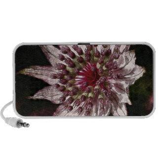 Astrantia Flower Doodle Portable Speakers