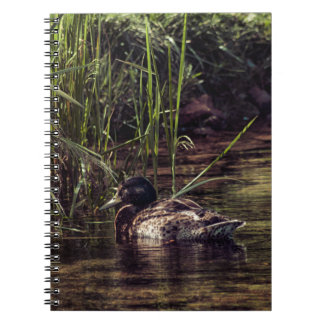 At Pond's Edge Notebook