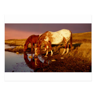 At the watering hole postcard