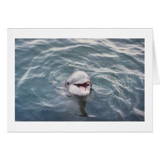 atlantic bottlenose dolphin card