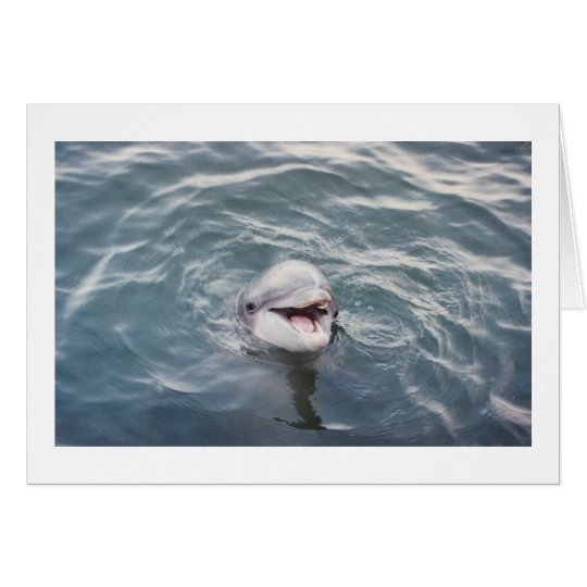 atlantic bottlenose dolphin card
