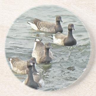 Atlantic Brant Geese Season's Greetings Series Beverage Coaster