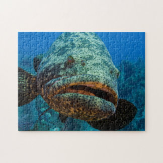 Atlantic Goliath Grouper Jigsaw Puzzle
