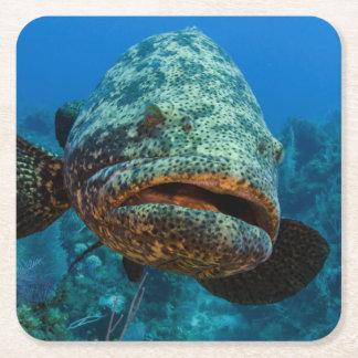 Atlantic Goliath Grouper Square Paper Coaster