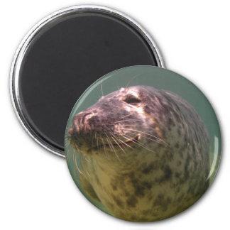 Atlantic Grey Seal Products Fridge Magnet