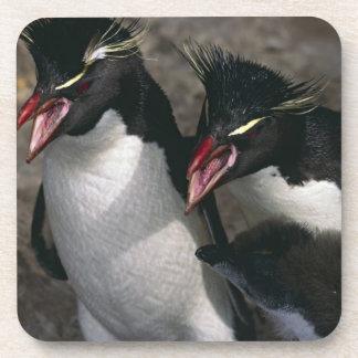 Atlantic Ocean, Falkland Islands. Rockhopper Beverage Coasters