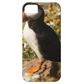 Atlantic Puffin Case For The iPhone 5