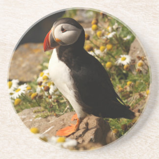 Atlantic Puffin Drink Coasters