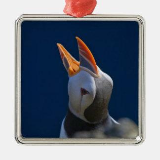 Atlantic Puffin (Fratercula arctica) 3 Silver-Colored Square Decoration