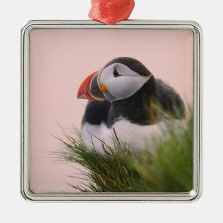 Atlantic Puffin (Fratercula arctica) 6 Silver-Colored Square Decoration