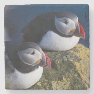 Atlantic Puffin (Fratercula arctica) 7 Stone Coaster