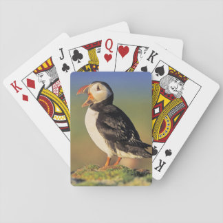 Atlantic Puffin (Fratercula Arctica) Playing Cards