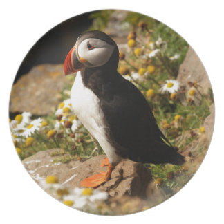 Atlantic Puffin Party Plate