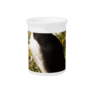 Atlantic Puffin Pitcher