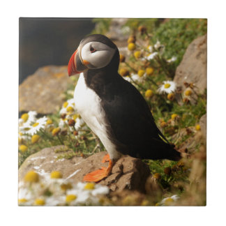 Atlantic Puffin Small Square Tile