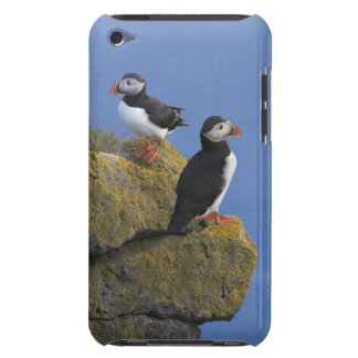 Atlantic Puffins (Fratercula arctica) on cliff Case-Mate iPod Touch Case