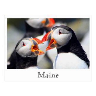 Atlantic Puffins Maine Coast Postcard