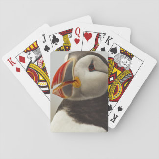 Atlantic Puffins on Machias Seal Island off Playing Cards