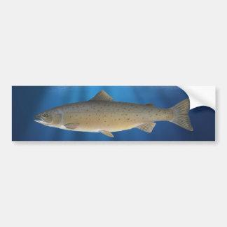 Atlantic Salmon – Bumper Sticker
