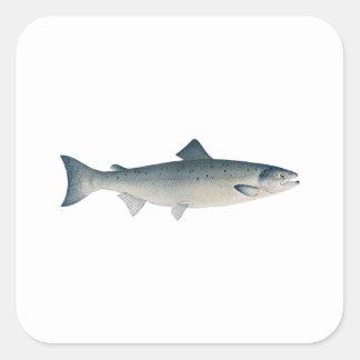 Atlantic Salmon Square Sticker