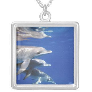 Atlantic spotted dolphins. Bimini, Bahamas. 10 Square Pendant Necklace