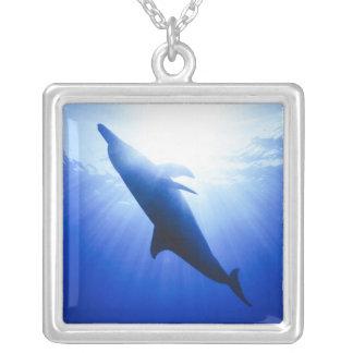 Atlantic spotted dolphins. Bimini, Bahamas. 2 Square Pendant Necklace