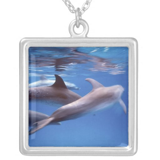 Atlantic spotted dolphins. Bimini, Bahamas. 6 Pendant