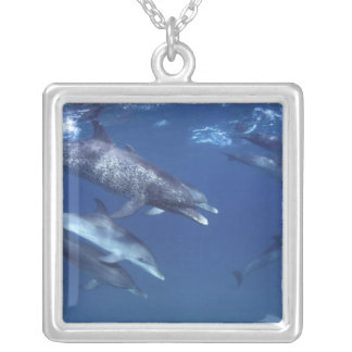Atlantic spotted dolphins. Bimini, Bahamas. 8 Square Pendant Necklace