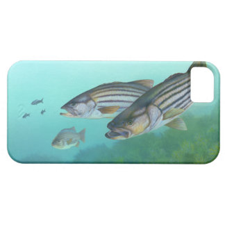 Atlantic Striped Bass Fish Morone Saxatilis Barely There iPhone 5 Case
