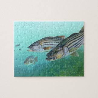 Atlantic Striped Bass Fish Morone Saxatilis Jigsaw Puzzle