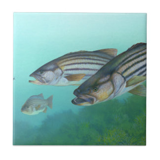 Atlantic Striped Bass Fish Morone Saxatilis Tile