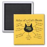 Atlas Of a Cat's Brain