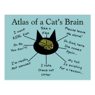 Atlas Of a Cat's Brain Postcard