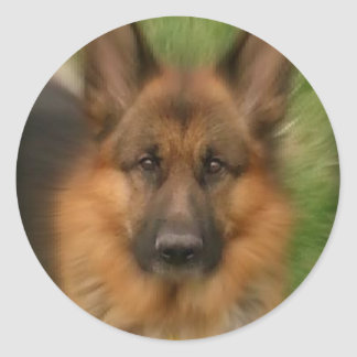Atlas the Wonderdog Classic Round Sticker