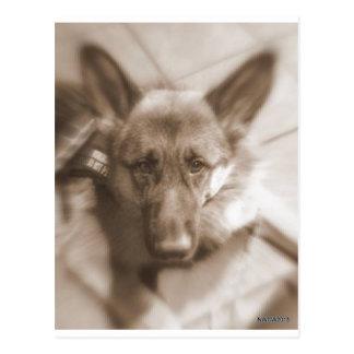 Atlas the Wonderdog Postcard
