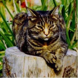 Attitude Cat Photo Sculpture