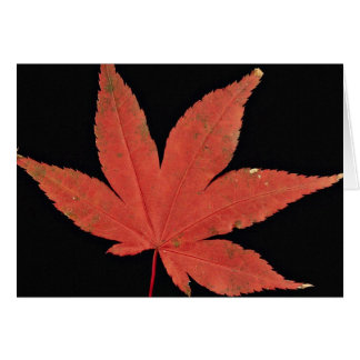 Attractive Japanese maple leaf Greeting Card