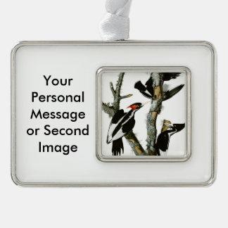 Aububon's Ivory-billed Woodpecker in Ash tree Silver Plated Framed Ornament