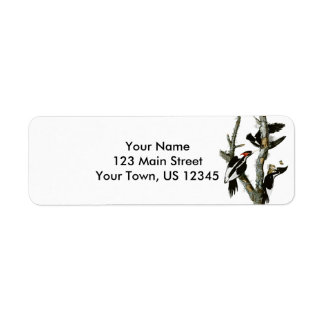 Aububon's Ivory-billed Woodpecker in Ash tree Return Address Label