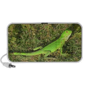 "Audio loudspeakers ""iguana-green and speedily "" speaker system"
