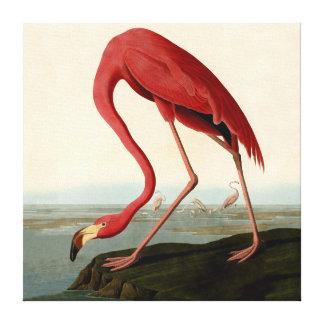 Audubon American Flamingo Canvas Print