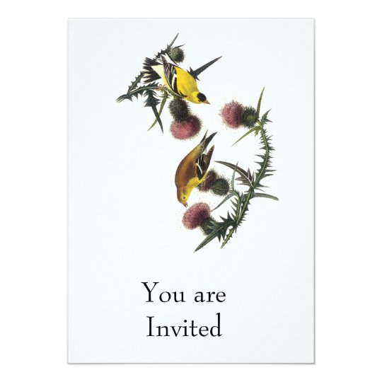 Audubon American Goldfinch Card