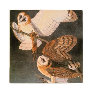 Audubon: Barn Owl Wood Coaster