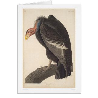 Audubon California Vulture (2609A) Greeting Card