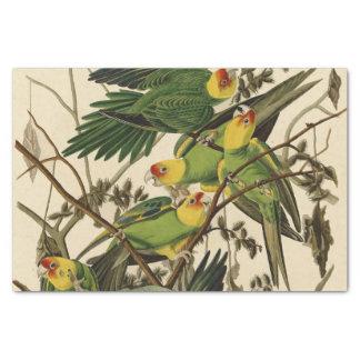 Audubon Carolina Parrot Print Birds of America Tissue Paper