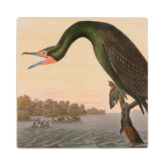 Audubon: Double Crested Cormorant Wood Coaster