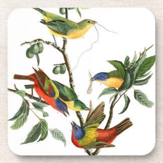 Audubon Finch Birds Wildlife Animals Coaster